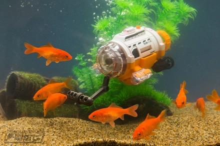 水槽と金魚1